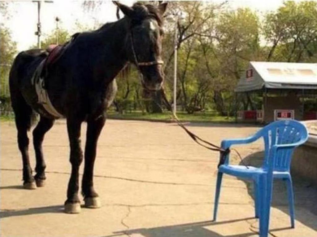 El caballo y la soga