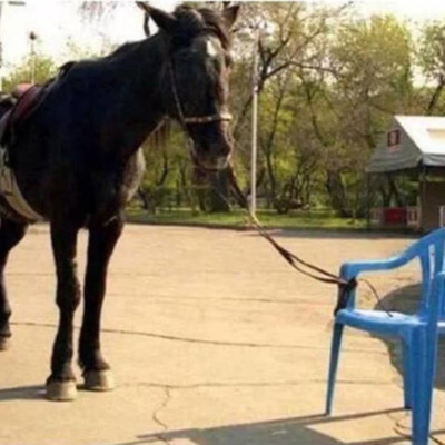 caballo en la silla